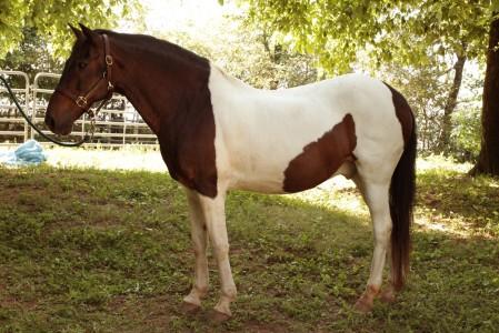 Casi Mio horse hannah -02 1000